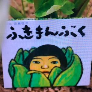 【絵本ブーム】ふきまんぶく