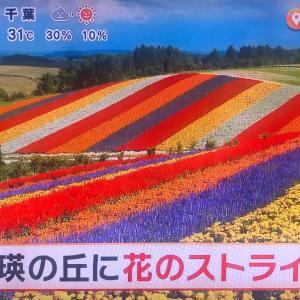日本/天国の絨毯