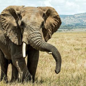 象に襲われてしまったモロッコのサイクリスト 原因は?