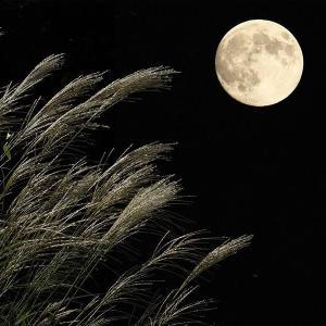 中秋の名月・眠さに勝てず