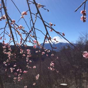 富士の龍がご挨拶⑤(富士アースワーク)