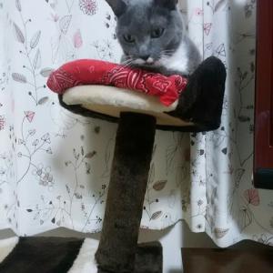 みかんちゃんの新しいキャットタワー
