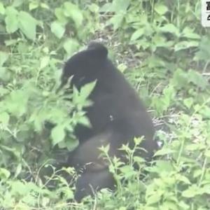 宮城県富谷市成田の住宅地で、5月30日午後、クマ1頭が目撃されました。