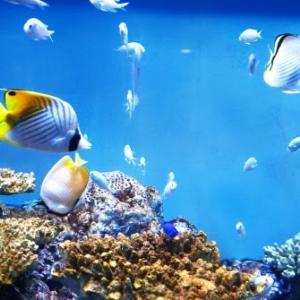 【パチンコ依存症】海物語は超危険なパチンコ機種。中毒性は抜群です!