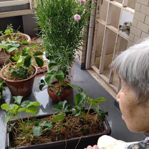 西2家庭菜園