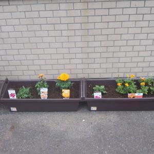 今年も東一階園芸始まりました!