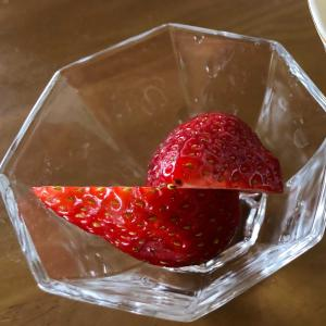 イチゴに挑戦!