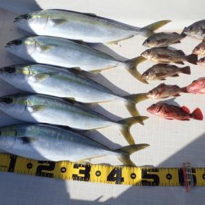 加奈丸Ⅱでの船釣りを本格的に始めた3月の釣果をまとめてみました。