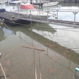 ようやく、雨も上がりましたが、とても加奈丸Ⅱで船釣り行ける状況ではありませんでした。