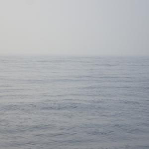 柳の下の2回目のオオアジを狙ってみましたが、湿度が高いせいか濃いい靄が出てポイントまで行けませんでした。(;´д`)トホホです。