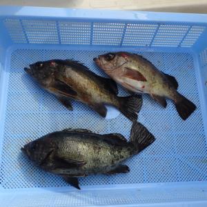 天気が回復したのでメバル釣りにって来ました。結果は( ^ω^)・・・でした。