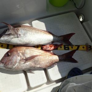 久しぶりに日曜日に釣行してみました。結果は渋かったですが、73センチと67センチのマダイを釣り上げました。( ^ω^)・・・ですかね?