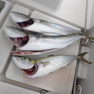 久しぶりに思い通りの釣行が出来ました。78センチのハマチを初め3匹を釣りました。\(^_^)/