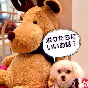 """届け❗️ """"小泉環境大臣へ陳情✦""""64767名 と99の犬猫の思いを"""""""""""