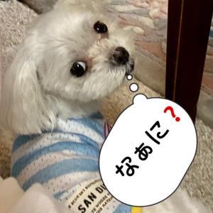 """《うれしいご報告》""""【サヨナラおかあさん】桃の記憶のおかあさん"""""""
