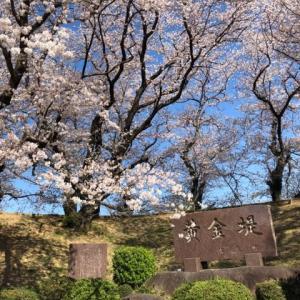 桜吹雪と共に