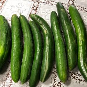 夏野菜消費