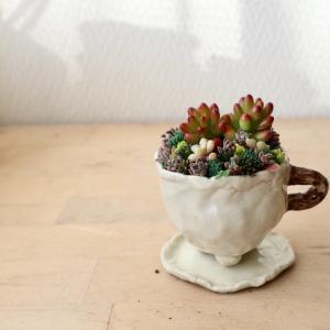 陶芸教室でつくったカップ&ソーサー鉢に多肉寄せ植え