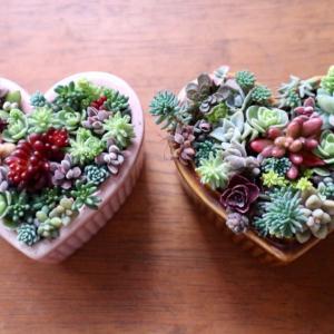 バレンタインにちなんでハート型ココットに寄せ植え