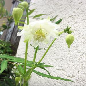 うちの花図鑑★咲いた0509