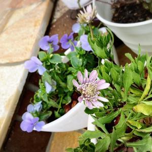 雨の庭★ria's Healing garden211124