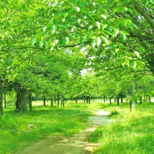回り道したり、迷い道に入ったり、立ち止まって休憩したり・・・歩んで来た道のりの全てが、尊い財産