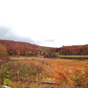 何度でも訪れたくなる秋田の絶景。「八幡平の紅葉」