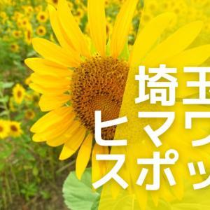 埼玉・川越市|伊佐沼公園の向日葵が満開!例年の見ごろは8月上旬くらいから