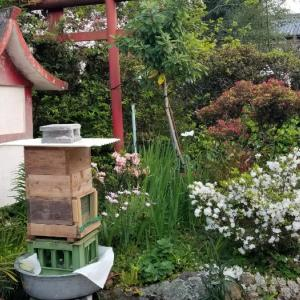 蜂蜜の巣箱