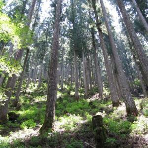 森づくりのプロフェッショナル育成プログラム