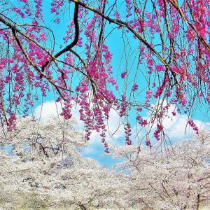 春うらら【羊山】光景