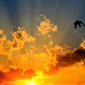 🐉🌾神々しい【落陽】光景❢❢