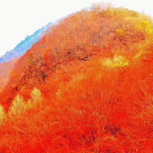 🐉🌈《中津峡》の紅葉風景❢❢