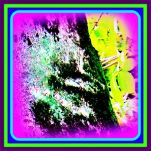 〖ヒルズ久が原〗樹木に【龍神様】出現❢❢