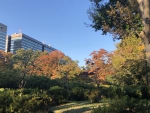 都内の秋、テクテク歩き
