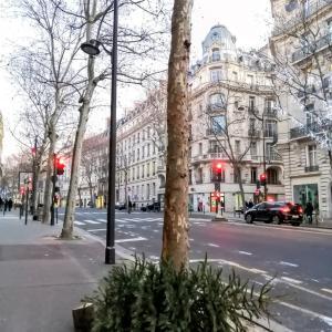 パリ・クリスマス後のクリスマスツリーの運命