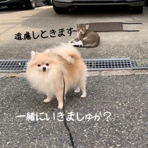 やりなおし神社 (^◇^;)