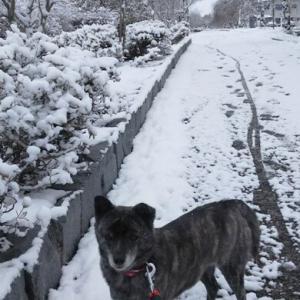 喜多方 冬の散歩風景
