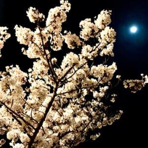 夜中のお花見