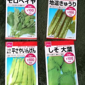 ダイソーで買った夏野菜の種を撒いたよ