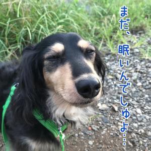 日本初!犬2匹が新型コロナ陽性!!