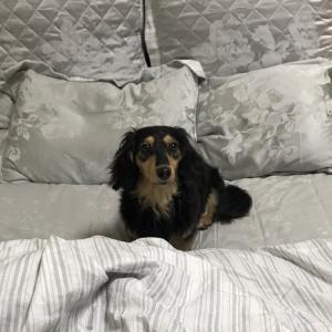 新しいベッド探し中