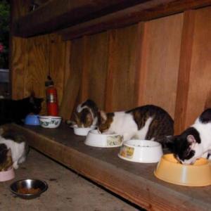 猫食堂営業中