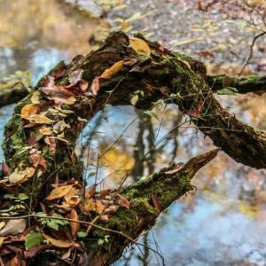 枯れ木に枯れ葉