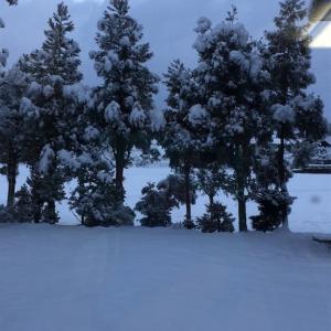 久しぶりの雪の日
