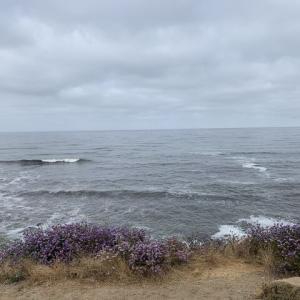 海はダメでした