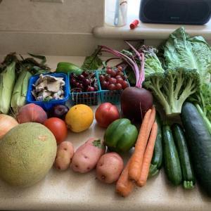 お野菜届きました〜!カレー作ります