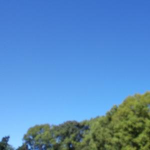 台風去って、青い空です!