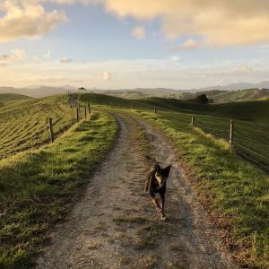 犬の散歩。犬に心配される私。