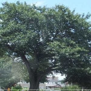 ただの木を描く(Painting Tree)